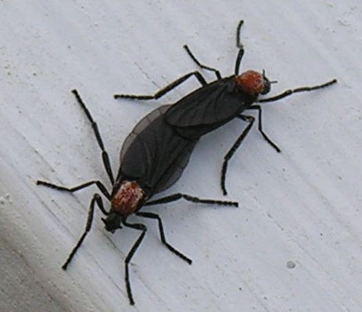 My nemesis … the lovebug