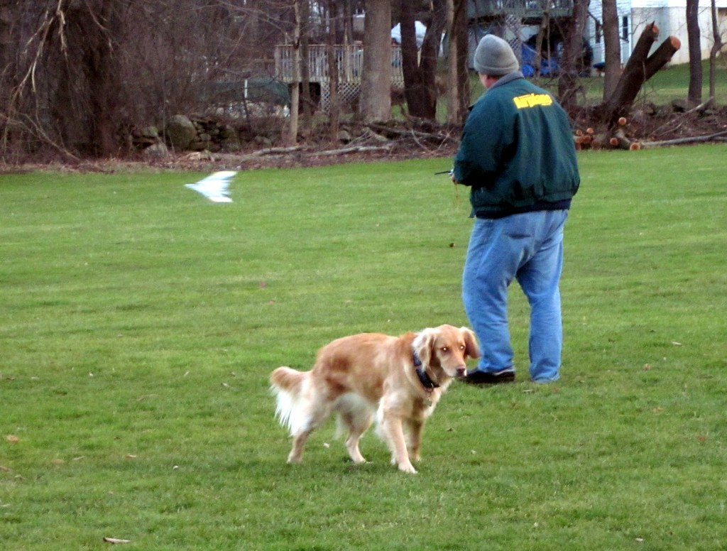 RC Flight Dog