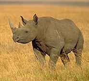 Drones to catch rhino poachers!