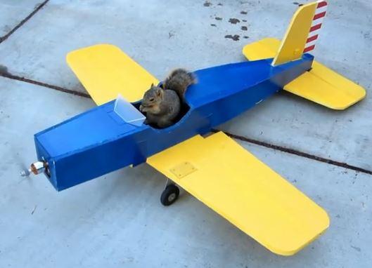 Rocky flies again!
